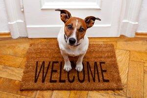 creating a safe home for your dog