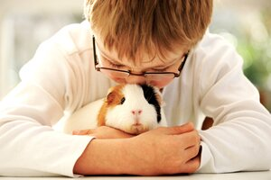 caring for your pet guinea pig