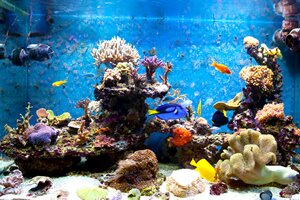caring for your tropical fish