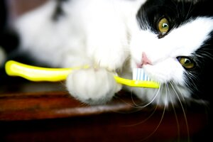 dental care for cats