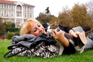socialising your cat