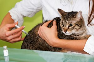 vaccinations in cats