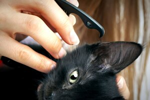 caring for your cat's ears