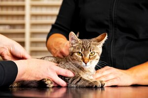 regular vet checks for your cat