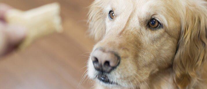 Dog food recipes healthy treats love that pet healthy treats for your pet dog treats forumfinder Images