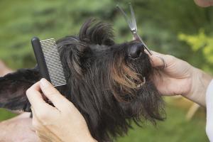 Dog Grooming Ryde