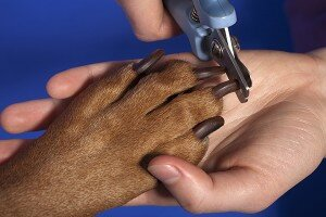 trimming dogs nails
