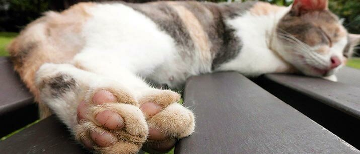 cat claws way out of grave concern