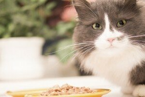 cats and respiratory infections